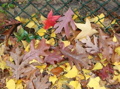 Loose Sidewalk Foliage