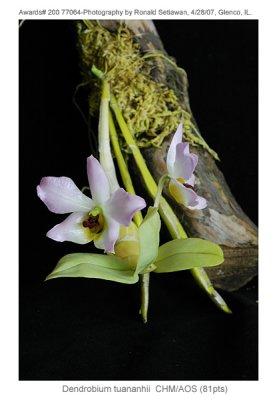 20077891 - Dendrobium trantuanii SilasCHM/AOS (81pts)
