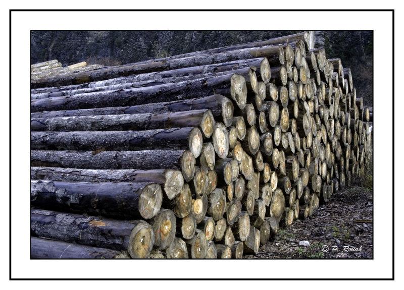 Woods - 6860