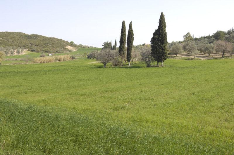 Miletus 2007 4495.jpg
