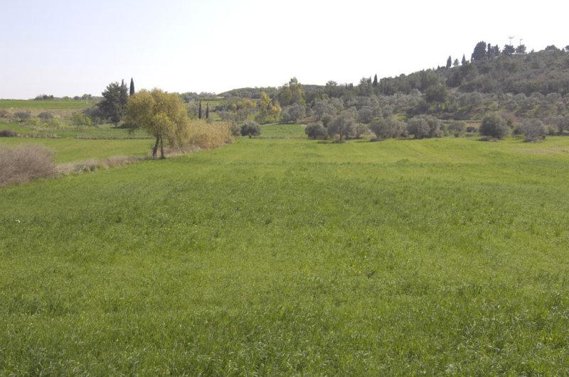 Miletus 2007 4496.jpg
