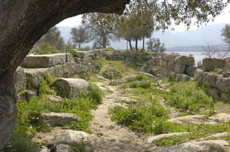 Herakleia 5072.jpg