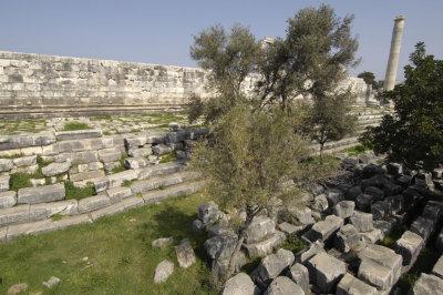 Didyma 2007 4377.jpg
