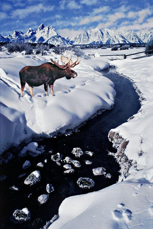 Moosebull at Frosty Creek.jpg