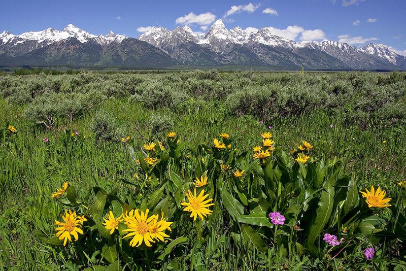 Teton Spring.jpg