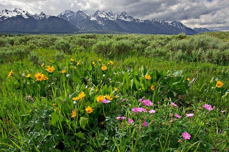 Teton Spring_2.jpg