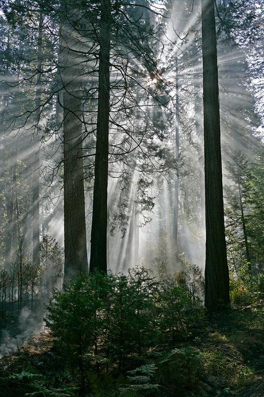 Rays of the Morning Sun.jpg