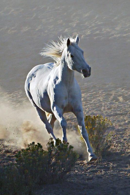 Runaway White Horse.jpg