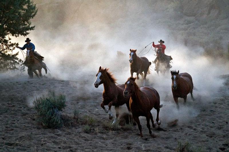 Horse Roundup_1332.jpg