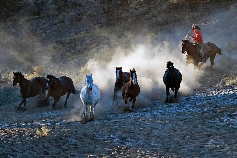 Horse Roundup_1378.jpg