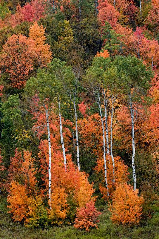 Autumn Glow on Hillside.jpg