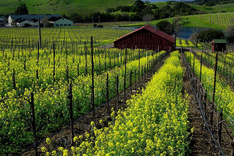 Napa Valley Spring.jpg