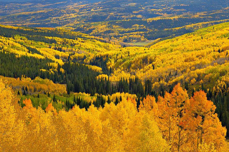Colorado Hillsides in Autumn.jpg