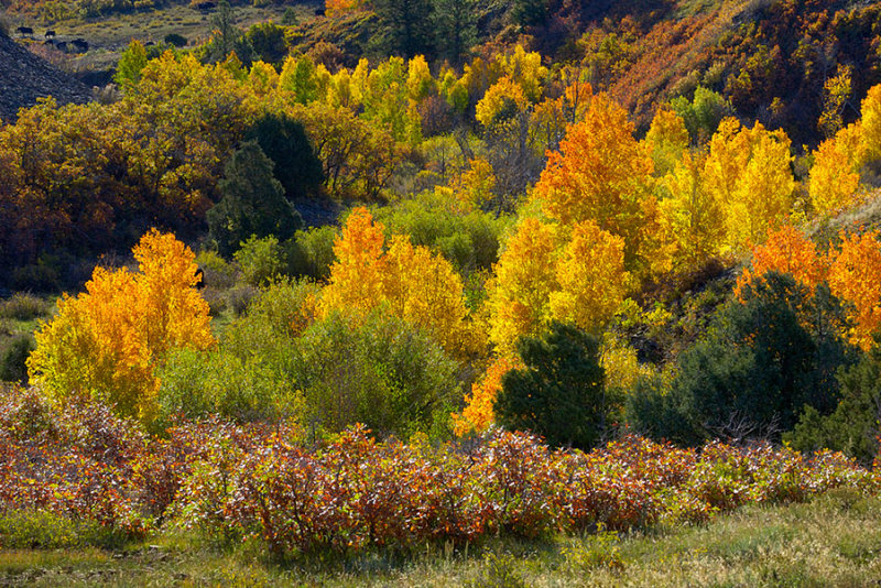 The Color of Autumn.jpg