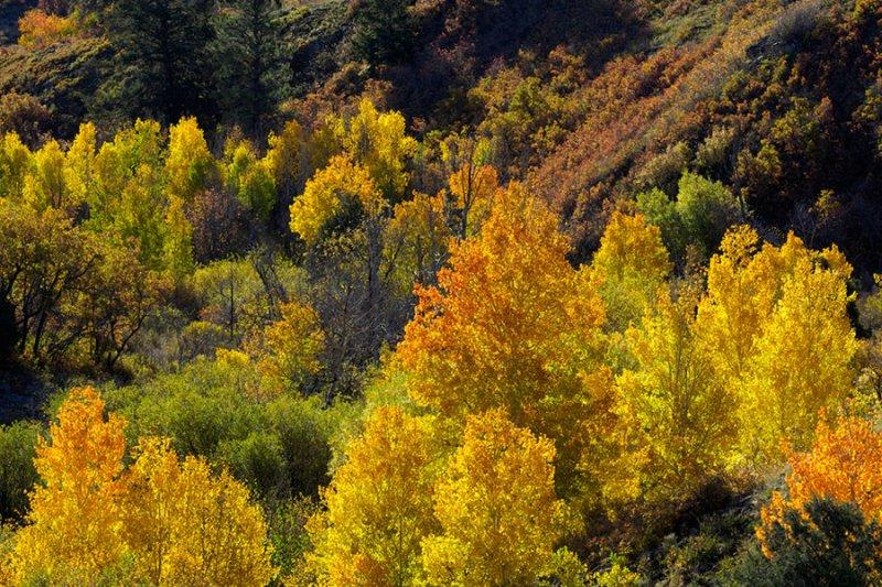 Autumn Variety.jpg