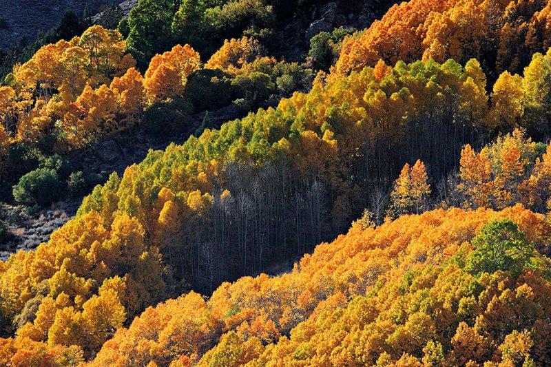 Colorful Hillside.jpg
