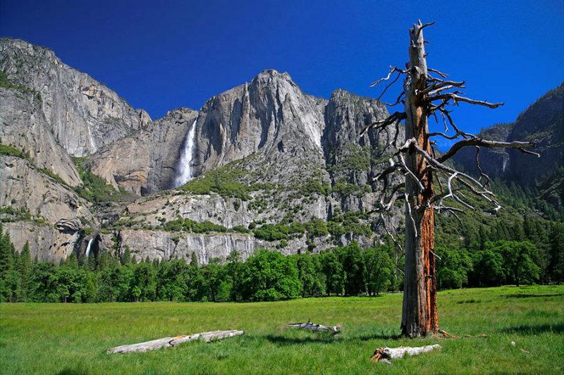 Yosemite Falls View.jpg