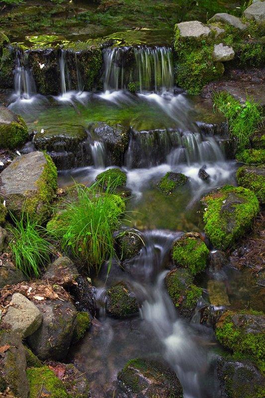 Fern Springs.jpg