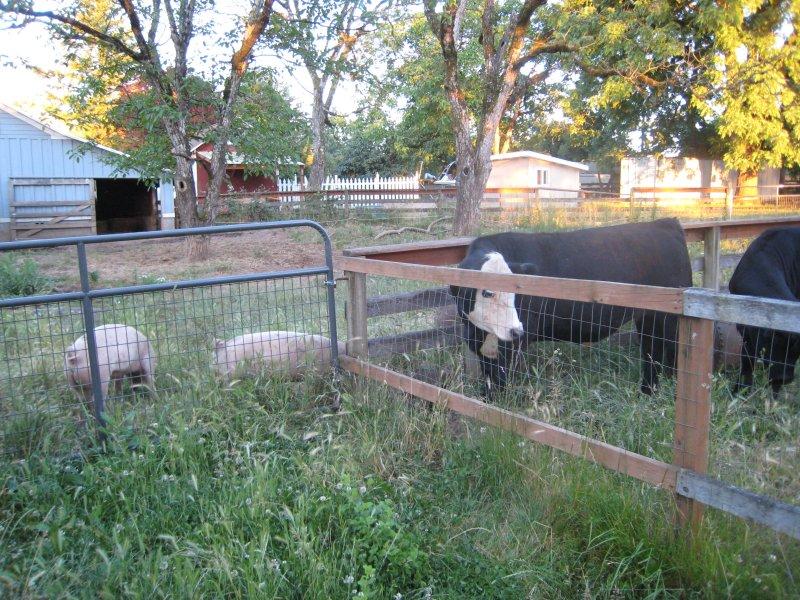 Animal Farm Ministers
