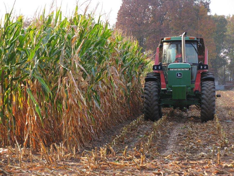IMG_2574_Chopping corn