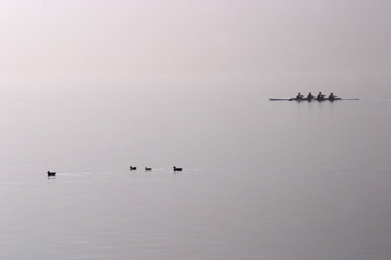 Rowers vs Ducks