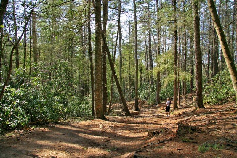 Hiking Trail- Linville Wilderness Area-North Carolina