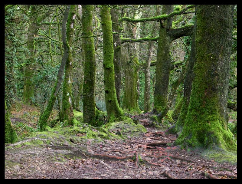 In the woods #1.jpg