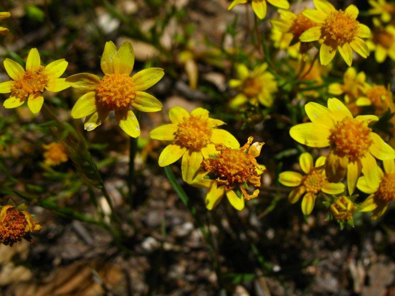 desert yellow.jpg