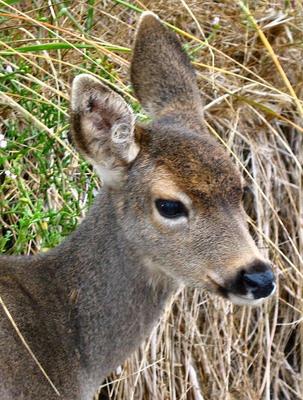 deer10.jpg