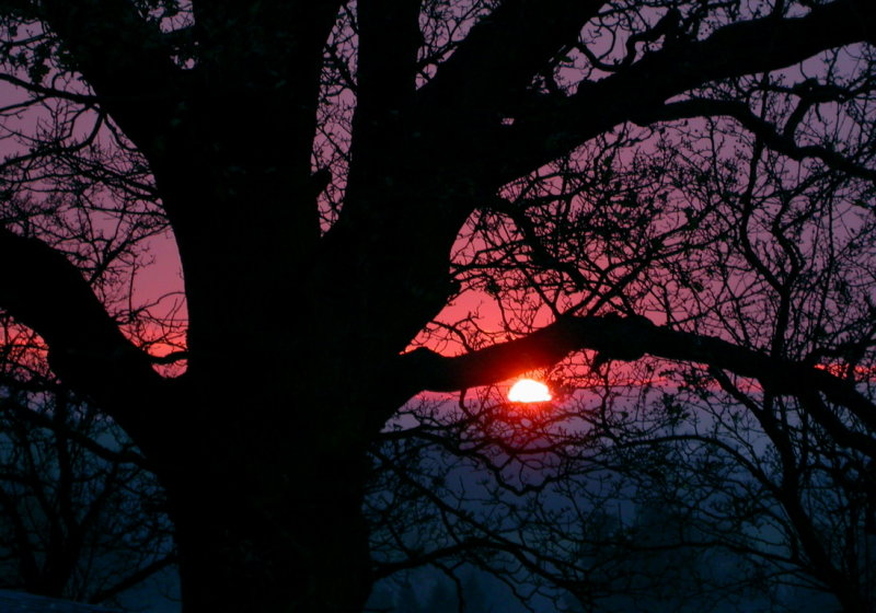 winter sunset at the bottom of the garden