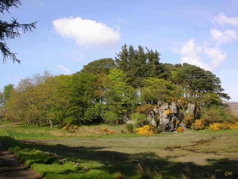 grove near the sound