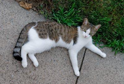 cat-2.jpg