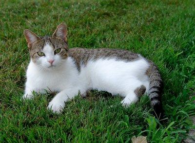 cat-5.jpg