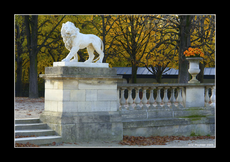 Lion dautomne - Paris