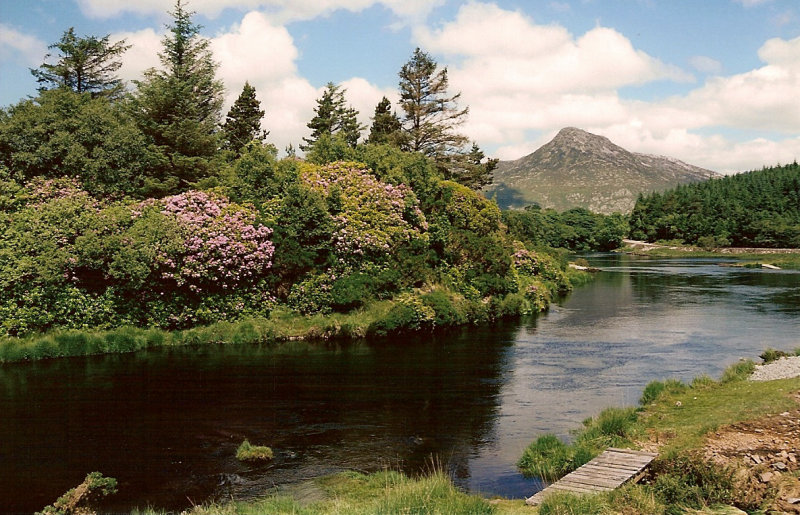 Connemara wild