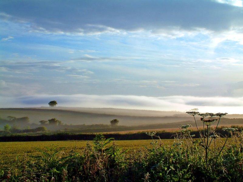 Fields in the mist near Dittisham