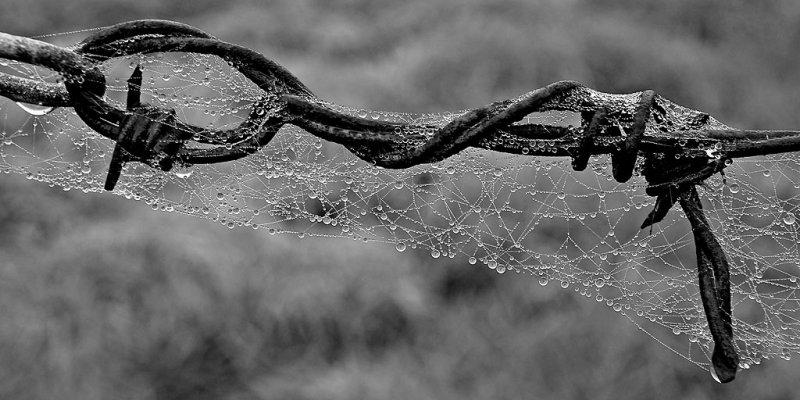 Webnwire