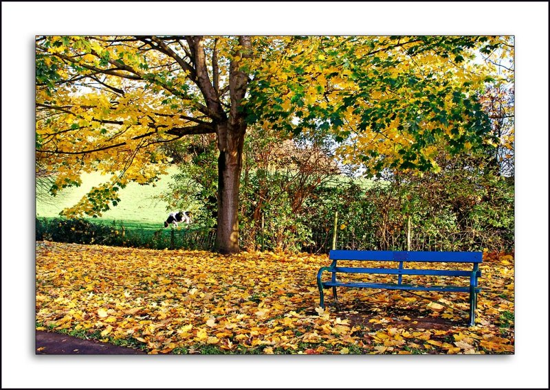 Blue bench and tree, Wells