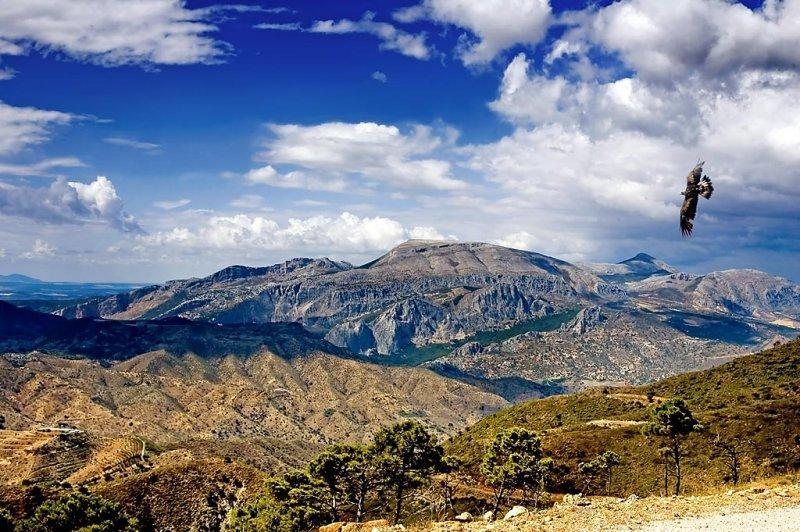 Eagle and mountains, Andalucia