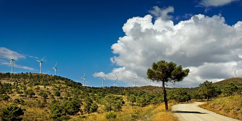Tree and turbines, Sierra de Aquas