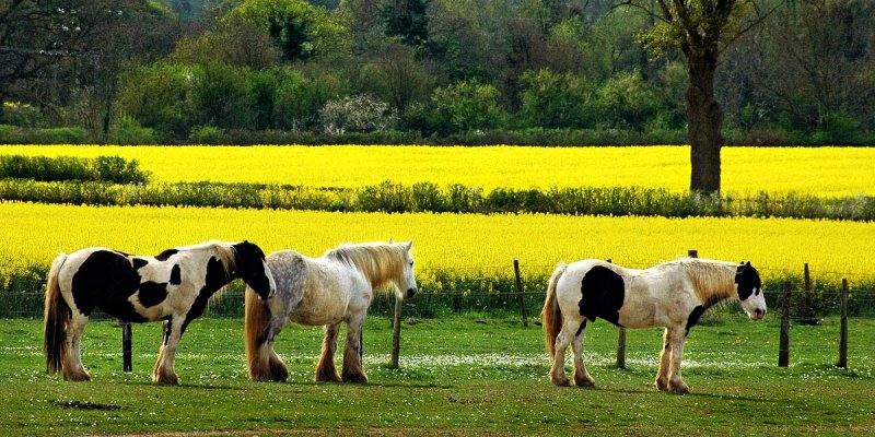 Carthorses and rule of thirds!