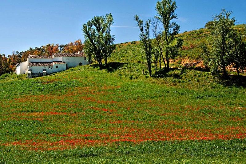 Poppy field and farmhouse