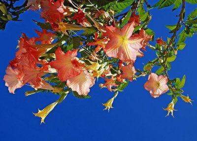 Redsnyellows, Marbella