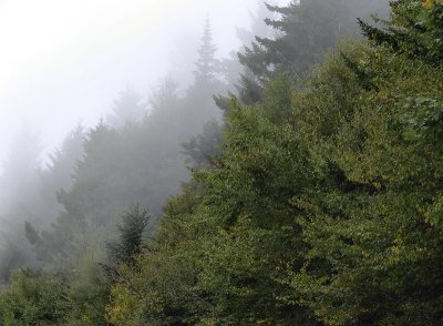Fog on Mt. Mitchell