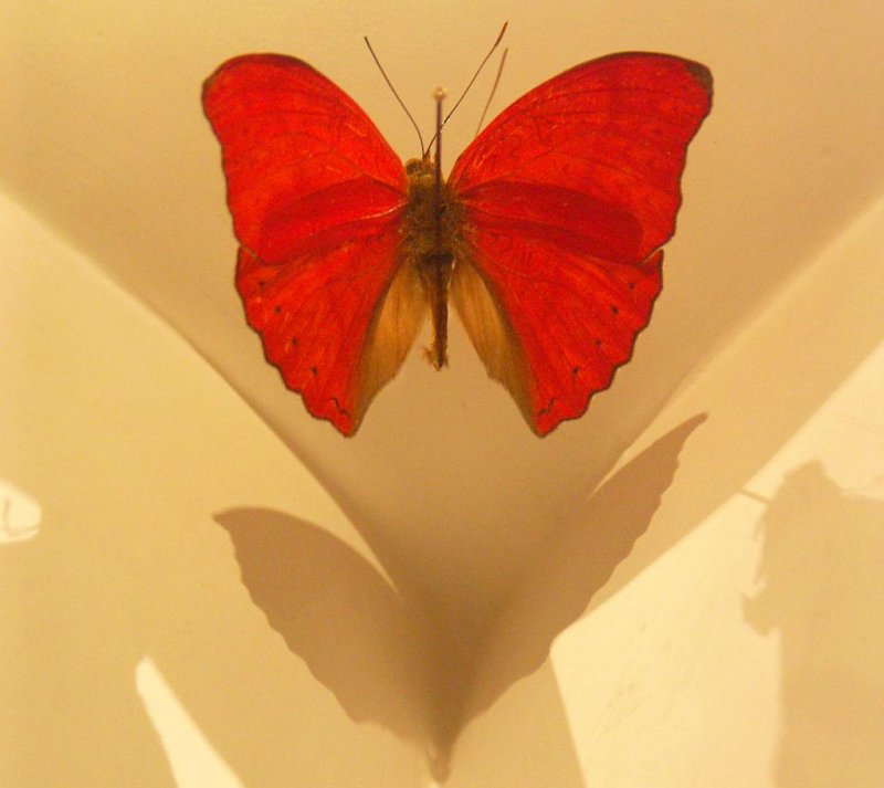 Madame Butterfly.