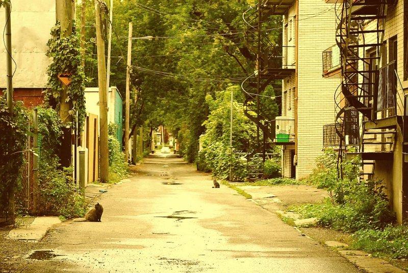 Le pays des chats de gouttières.