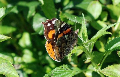 butterfly-50.jpg