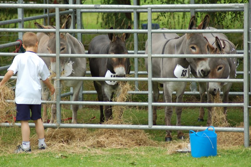 cattle 120.JPG