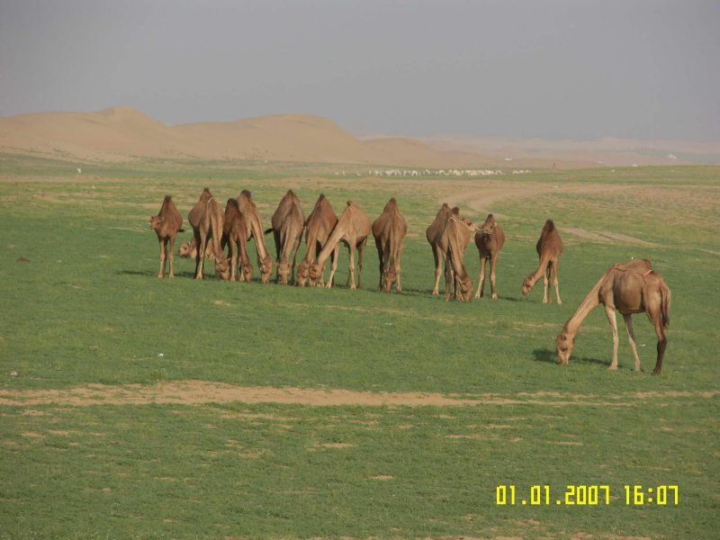 Natural combination of desert and Green landscape - Near Al-Leith.jpg