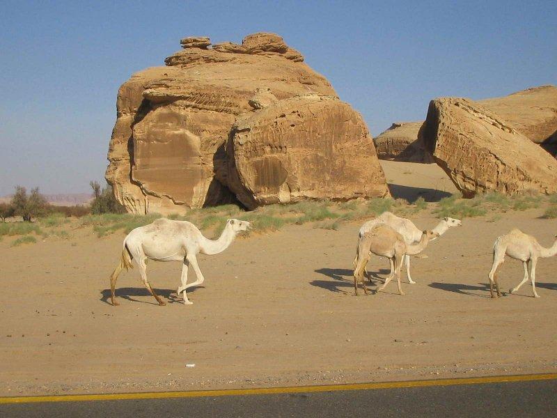 Camel Walk.jpg
